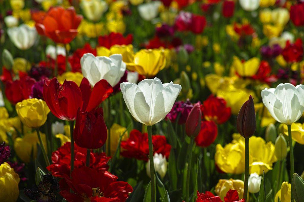 Energy saving ideas for your garden