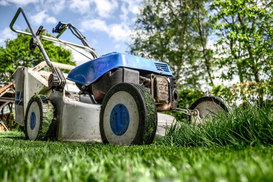 Save Money Whilst Gardening